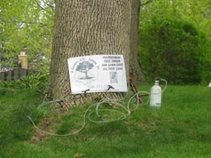 Treating an ash tree for EAB