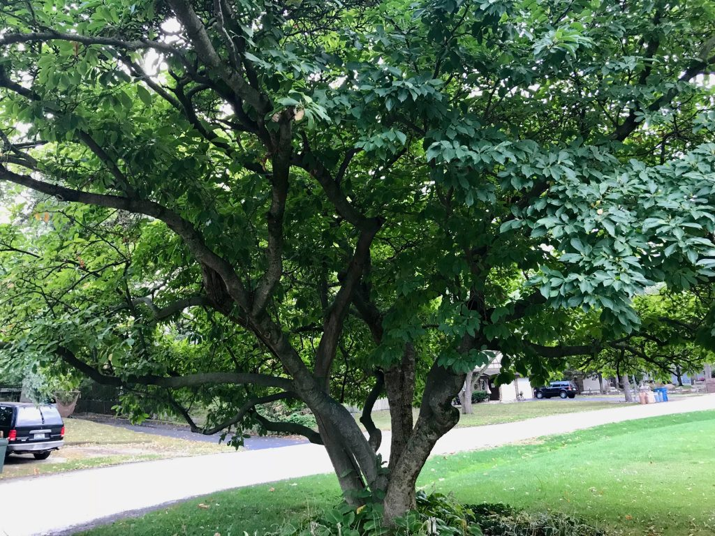 Stein Tree Service Discusses the History of Arbor Day