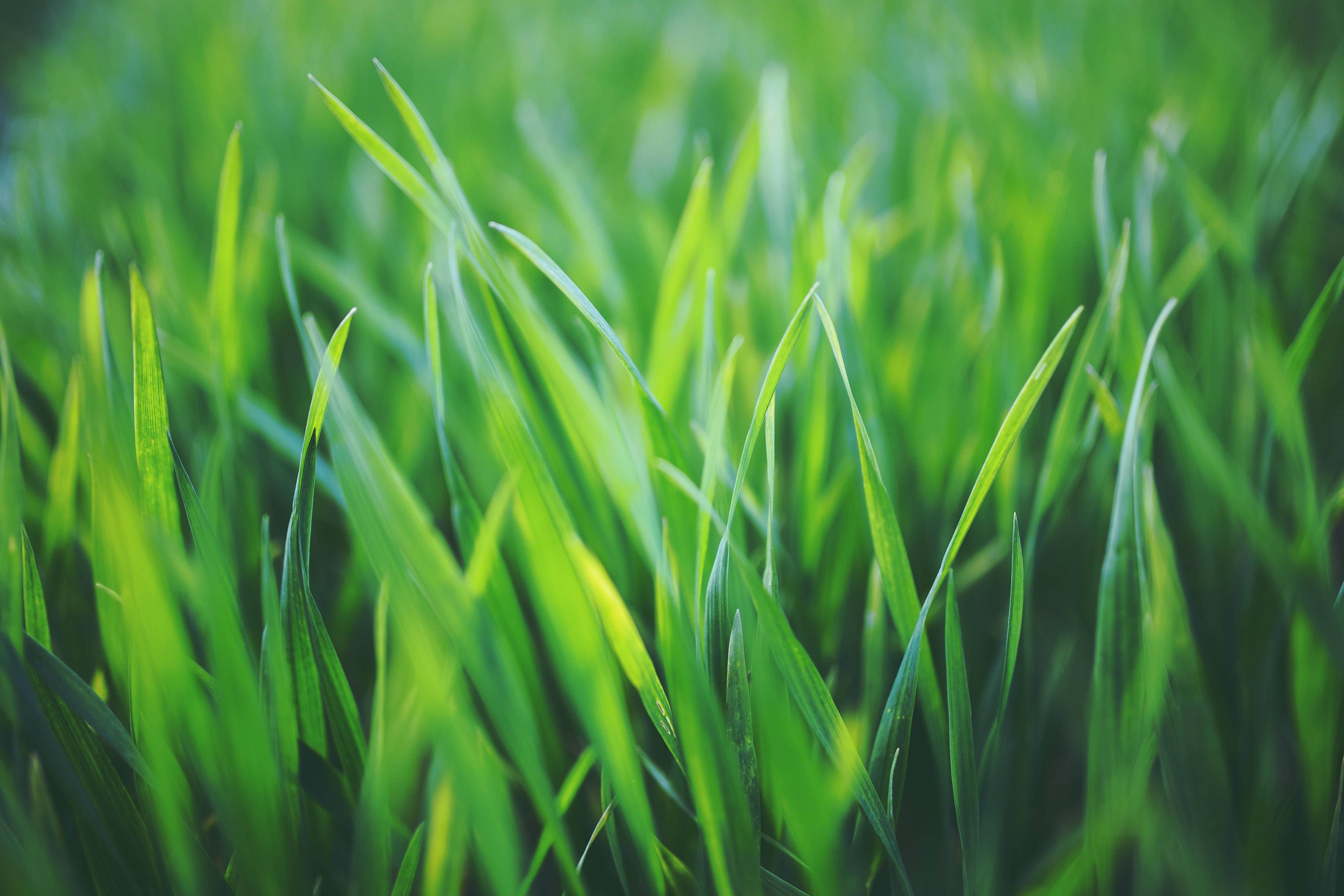 A lush, green lawn