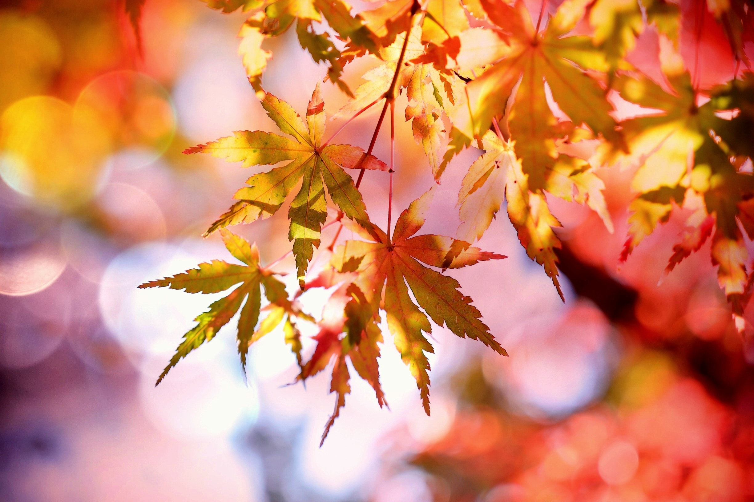 Red, orange, and yellow leaves against a bright sky